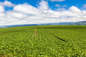 crop protection, nematicides, seed treatment